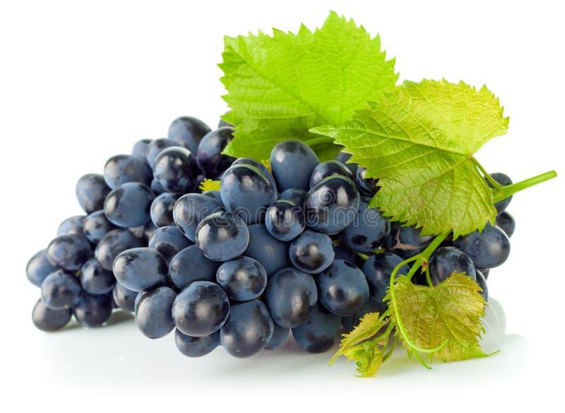 Виноградины группы голубые с зелеными лист стоковая фотография rf