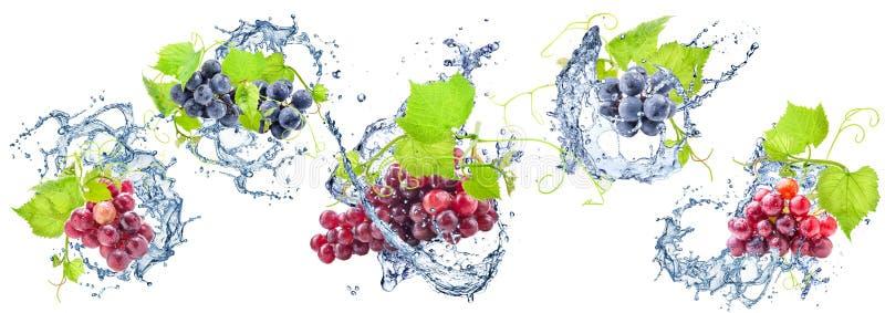 Виноградины и выплеск воды стоковые фото