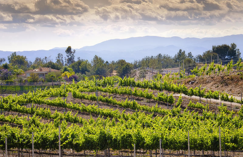 Виноградники винной страны Temecula, Калифорния стоковое фото
