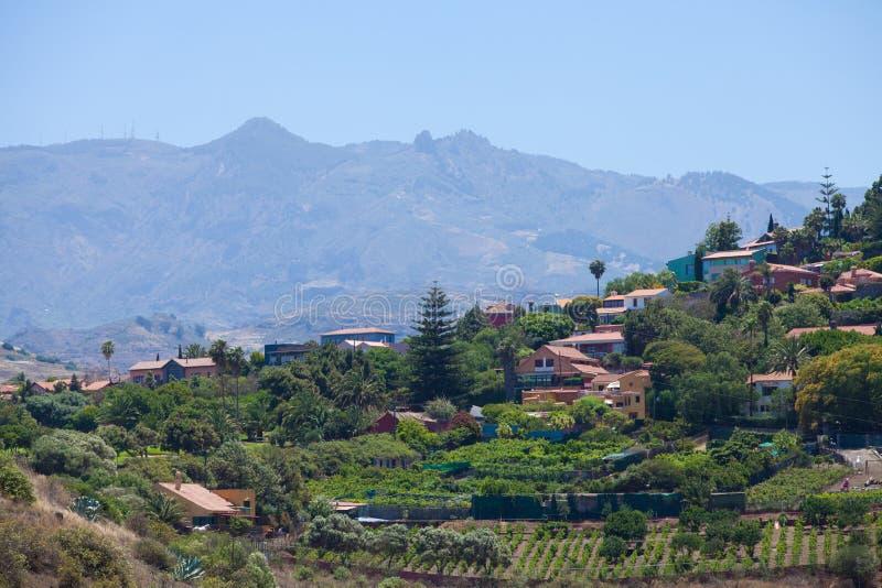 Виноградники вокруг Bandama стоковая фотография rf