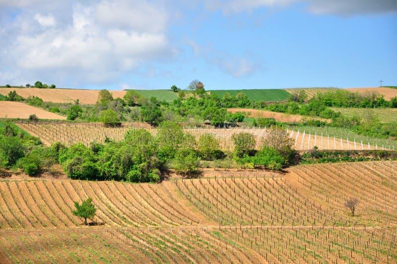 Виноградники в горе стоковое фото