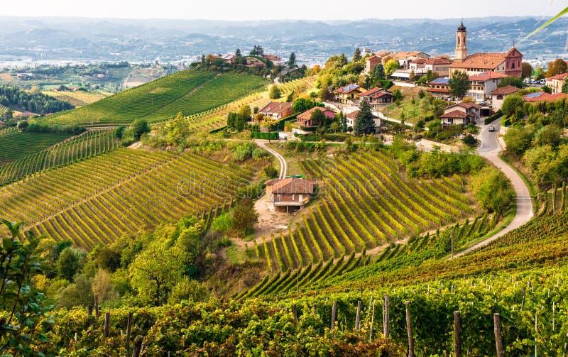 Виноградники в Италии стоковое фото rf