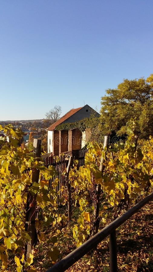 Виноградники в осени стоковое фото