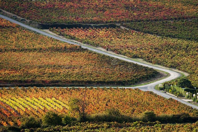 Виноградники в осени стоковые фотографии rf