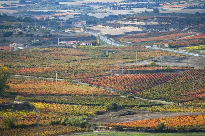 Виноградники в осени стоковая фотография