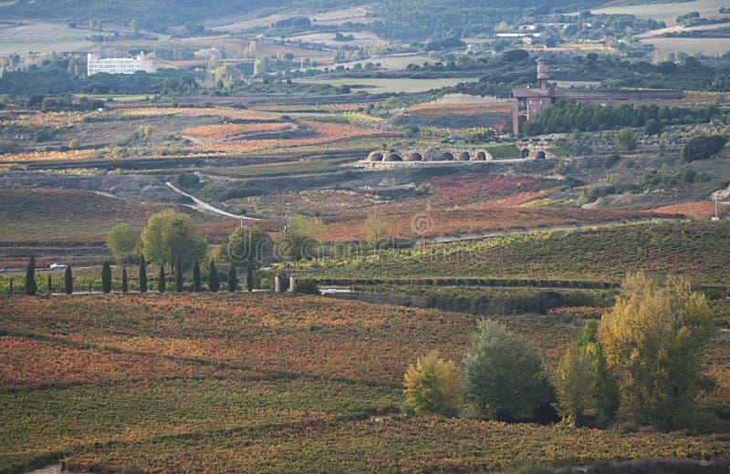 Виноградники в осени стоковые изображения rf