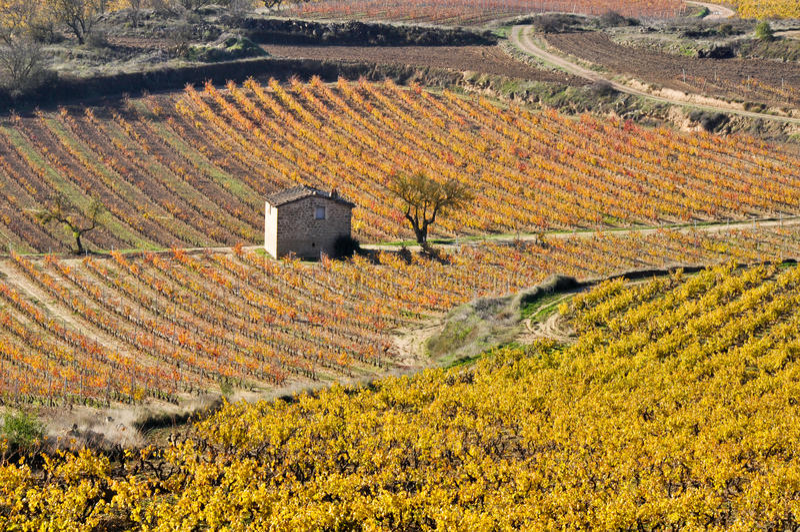 Виноградники в осени, La Rioja, Испания стоковые изображения rf