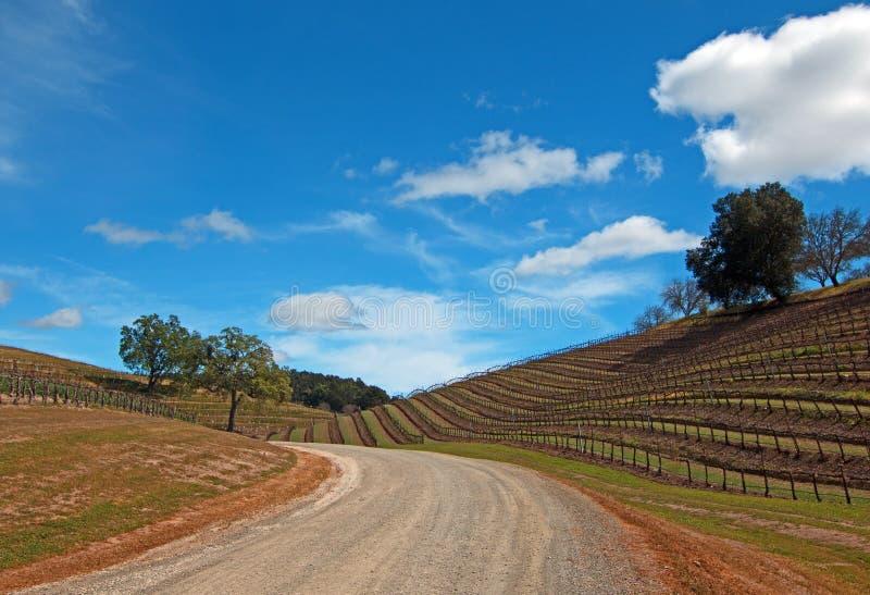 Виноградники в пейзаже винной страны Paso Robles стоковая фотография rf