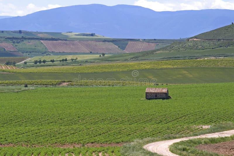 Виноградники в сельской местности La Rioja, Испании стоковые изображения rf