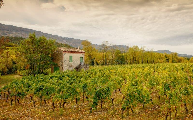 Виноградники в французской сельской местности, Drome, Clairette de Умирать стоковые фото