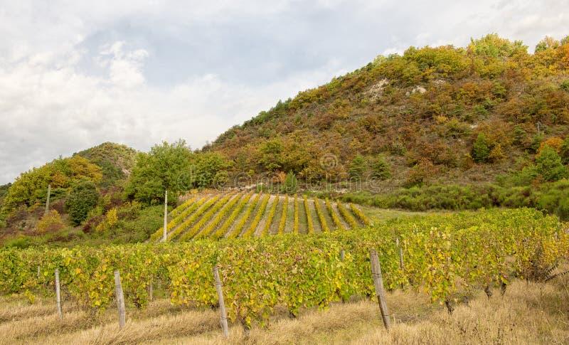 Виноградники в французской сельской местности, Drome, Clairette de Умирать стоковая фотография