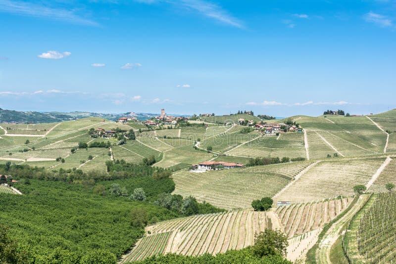 Виноградники в comune Barbaresco, Италии стоковое изображение