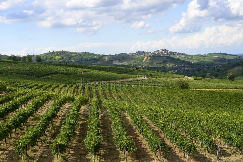 Виноградники в Oltrepo Pavese (Италия) стоковые фото