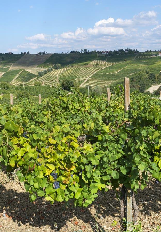 Виноградники в Oltrepo Pavese (Италия) стоковые фотографии rf