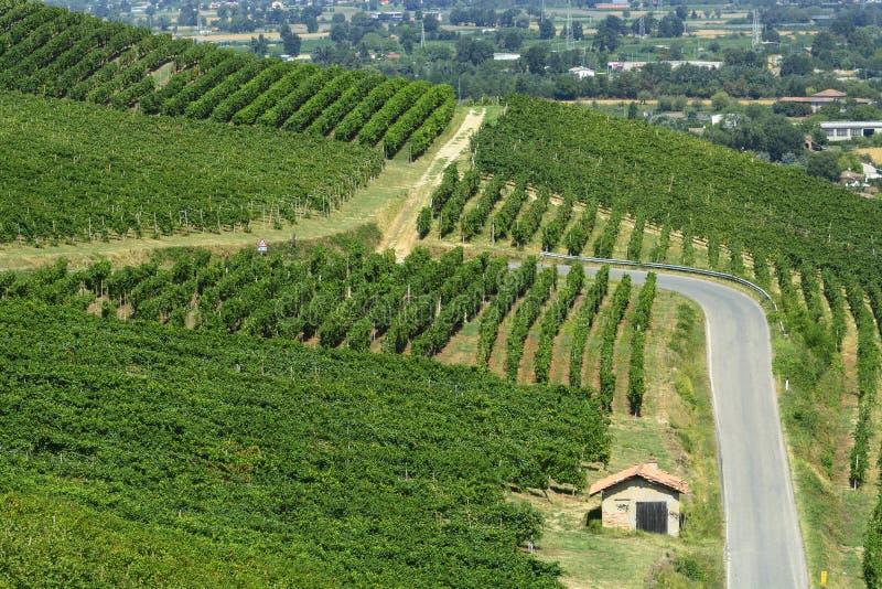 Виноградники в Oltrepo Pavese (Италия) стоковые изображения rf