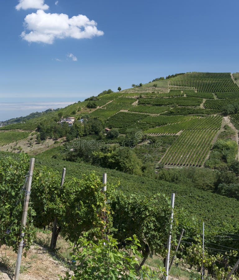 Виноградники в Oltrepo Pavese (Италия) стоковая фотография rf