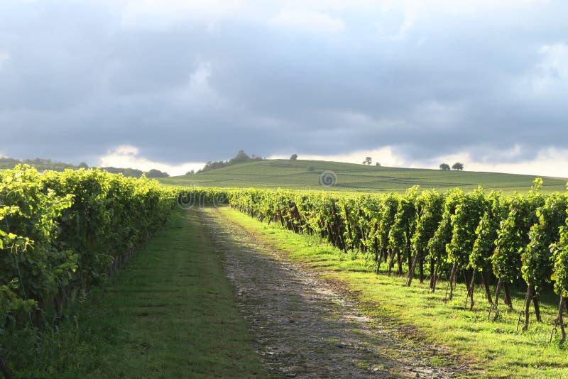 виноградники Германии зеленые стоковые изображения