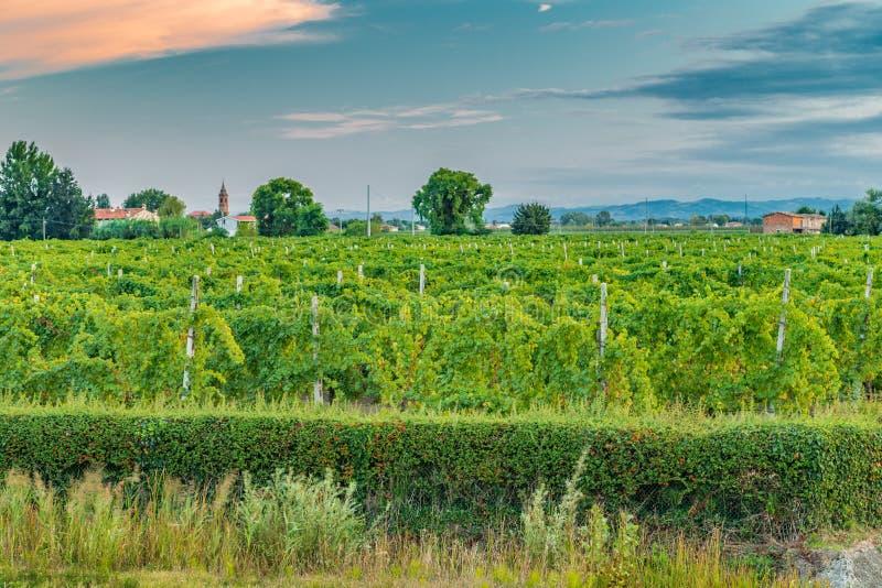 виноградники Германии зеленые стоковая фотография rf