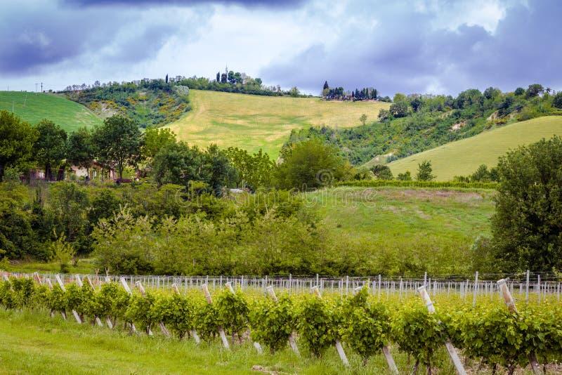 виноградники Германии зеленые стоковое фото rf