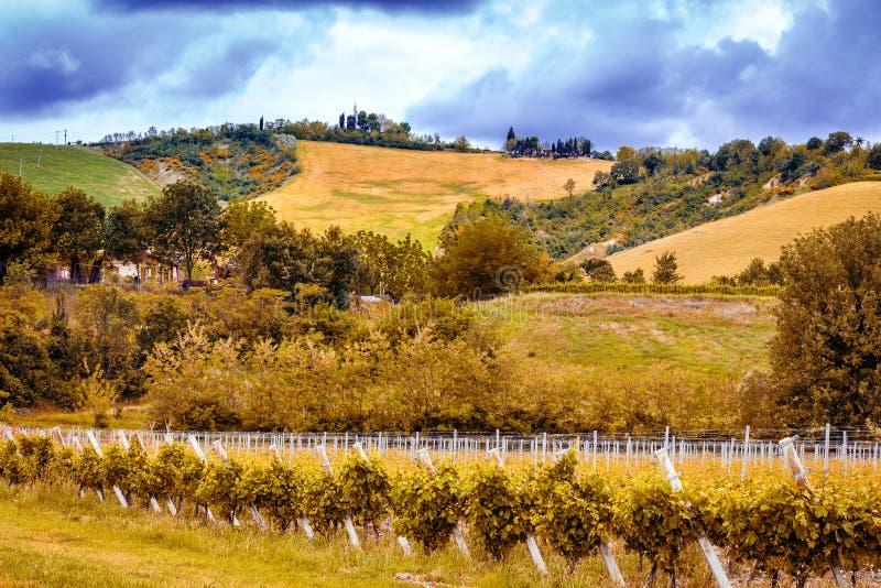 виноградники Германии зеленые стоковые изображения rf
