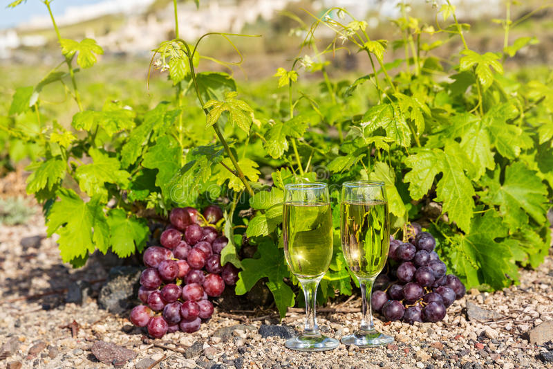 Виноградники и вино по бокалам стоковые фотографии rf