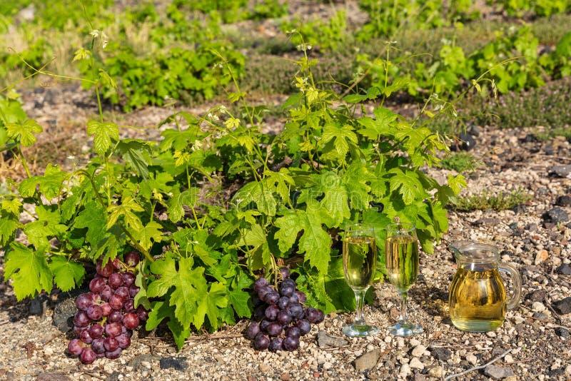 Виноградники и вино по бокалам стоковое фото rf