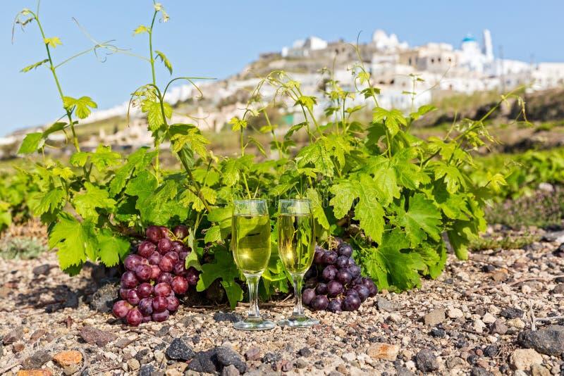 Виноградники и вино по бокалам стоковая фотография
