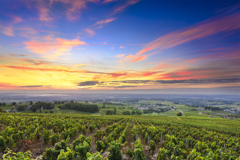 Виноградники и восход солнца, божоле, Рона, Франция стоковые изображения rf