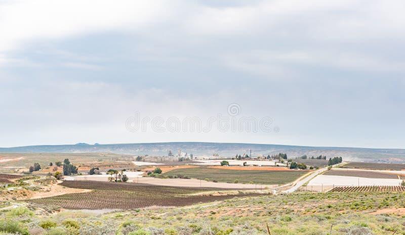 Виноградники и фабрика около Vredendal стоковые изображения rf