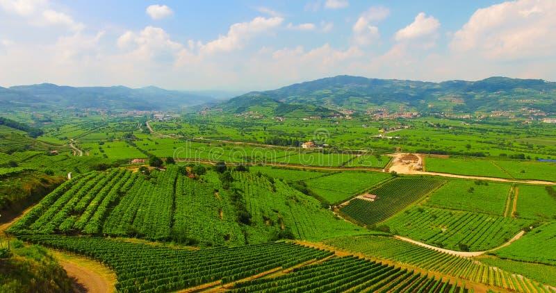 Виноградники на итальянских холмах стоковое фото