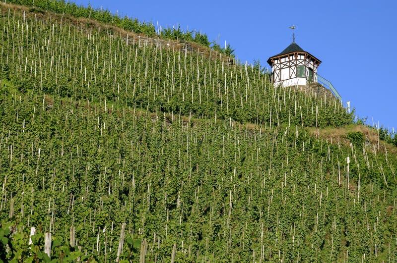 Виноградники на Мозель и полу-timbered укрытии стоковые изображения rf