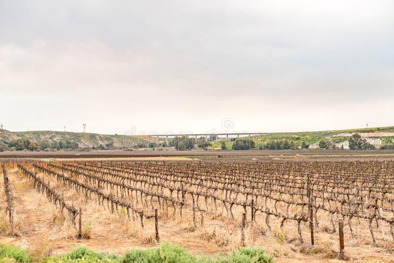 Виноградники около Vredendal стоковые фотографии rf