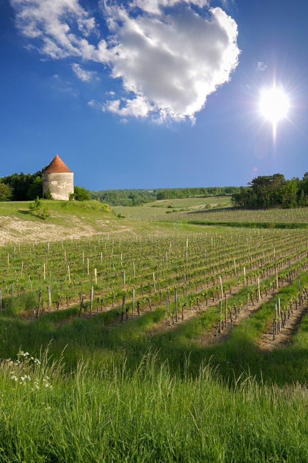 Виноградники Святого Emilion, виноградников Бордо стоковые фото
