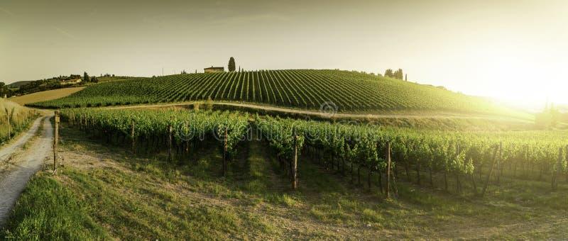 виноградники Тосканы стоковая фотография