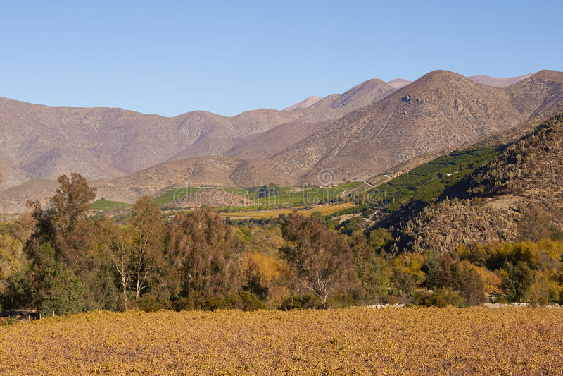 Виноградники Чили стоковое фото