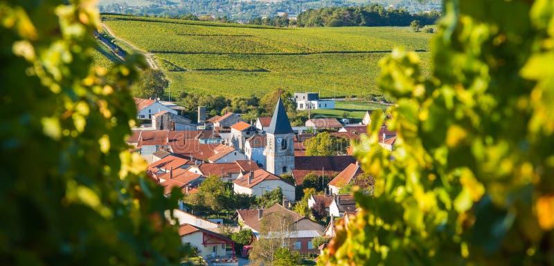 Виноградники Шампани в des Коута запирают об стоковое изображение rf
