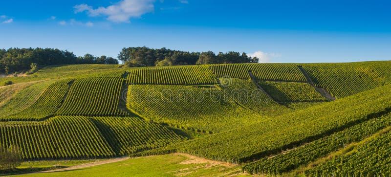 Виноградники Шампани в des Коута запирают об стоковые фото