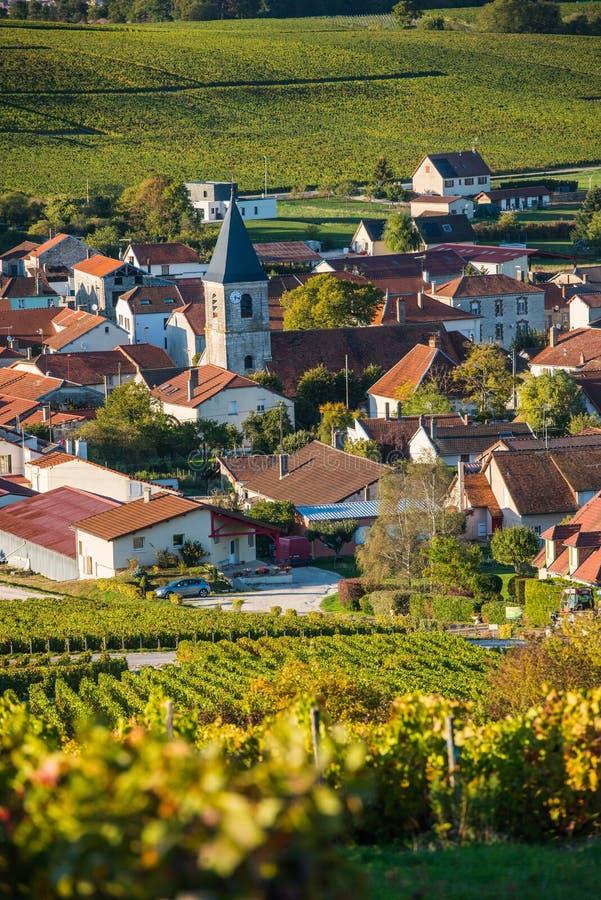 Виноградники Шампани в des Коута запирают об стоковая фотография rf
