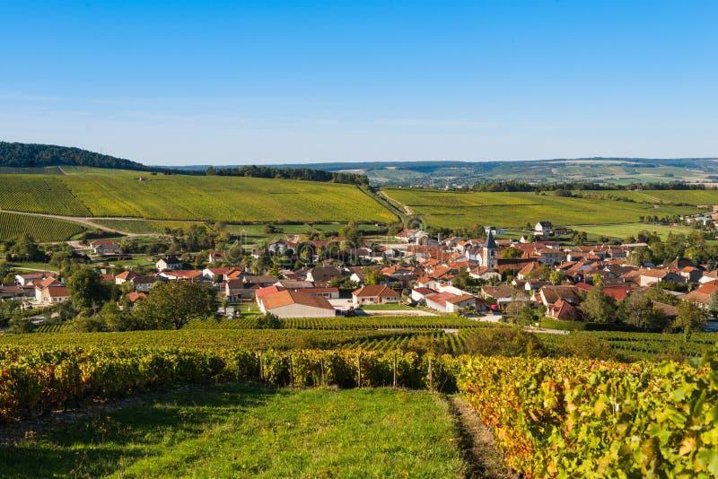 Виноградники Шампани в des Коута запирают об стоковое изображение