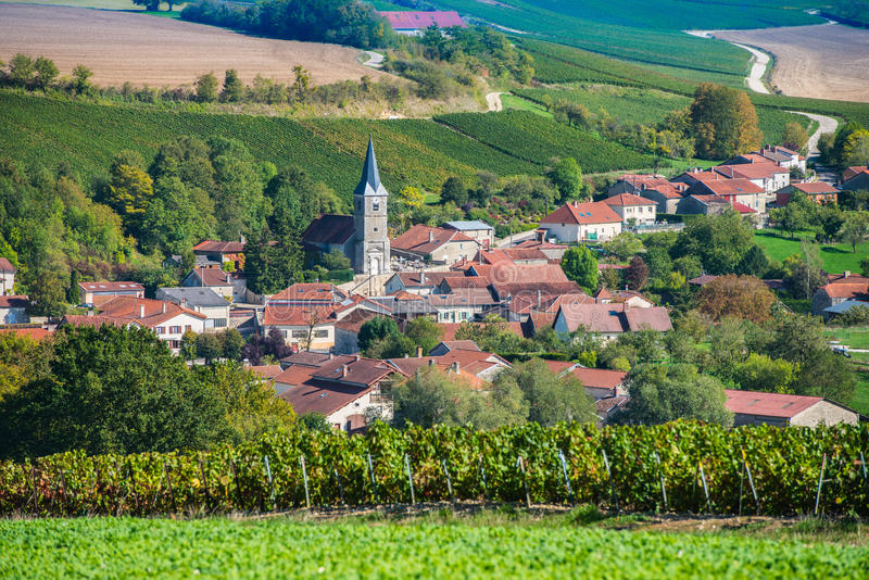 Виноградники Шампани в des Коута запирают об стоковые изображения rf