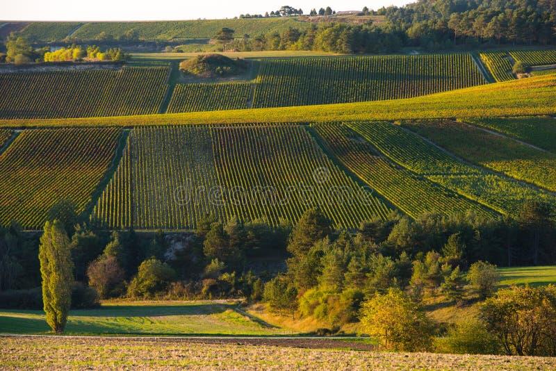 Виноградники Шампани в des Коута запирают об стоковое фото rf