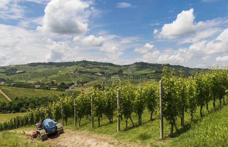 Виноградники Barbaresco, Garbelletto Пьемонта стоковая фотография rf