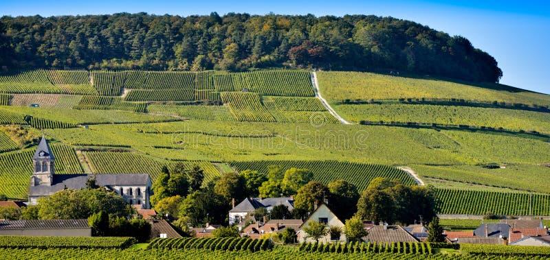 Виноградники Mancy Шампани в отделе Марны, Франции стоковая фотография rf