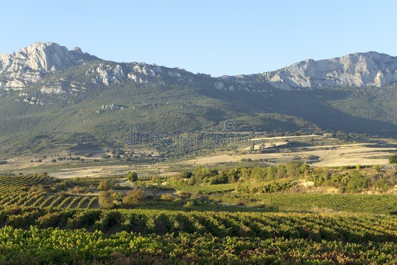 Виноградники Rioja стоковое фото rf