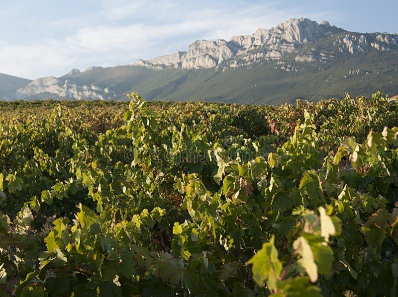 Виноградники Rioja стоковые изображения rf
