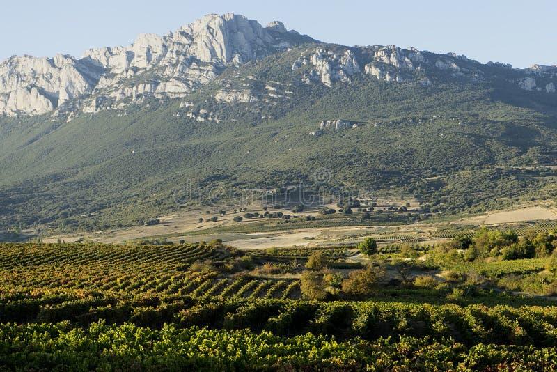 Виноградники Rioja стоковые фотографии rf