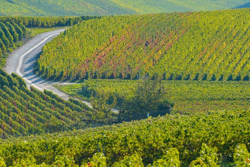 Виноградники Sermiers Шампани в отделе Марны, Франции стоковые фото