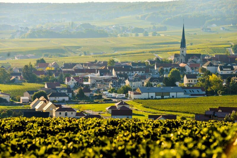 Виноградники Sermiers Шампани в отделе Марны, Франции стоковая фотография rf