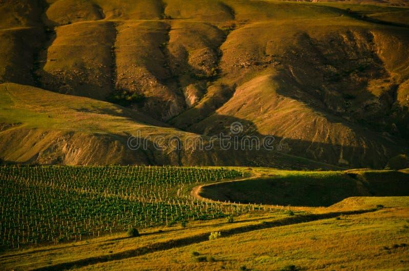 Виноградник в горах стоковые фото