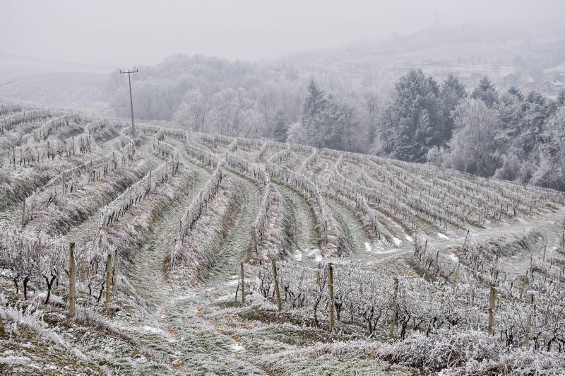 Download Виноградник в зиме стоковое изображение. изображение насчитывающей замерзано - 40585615